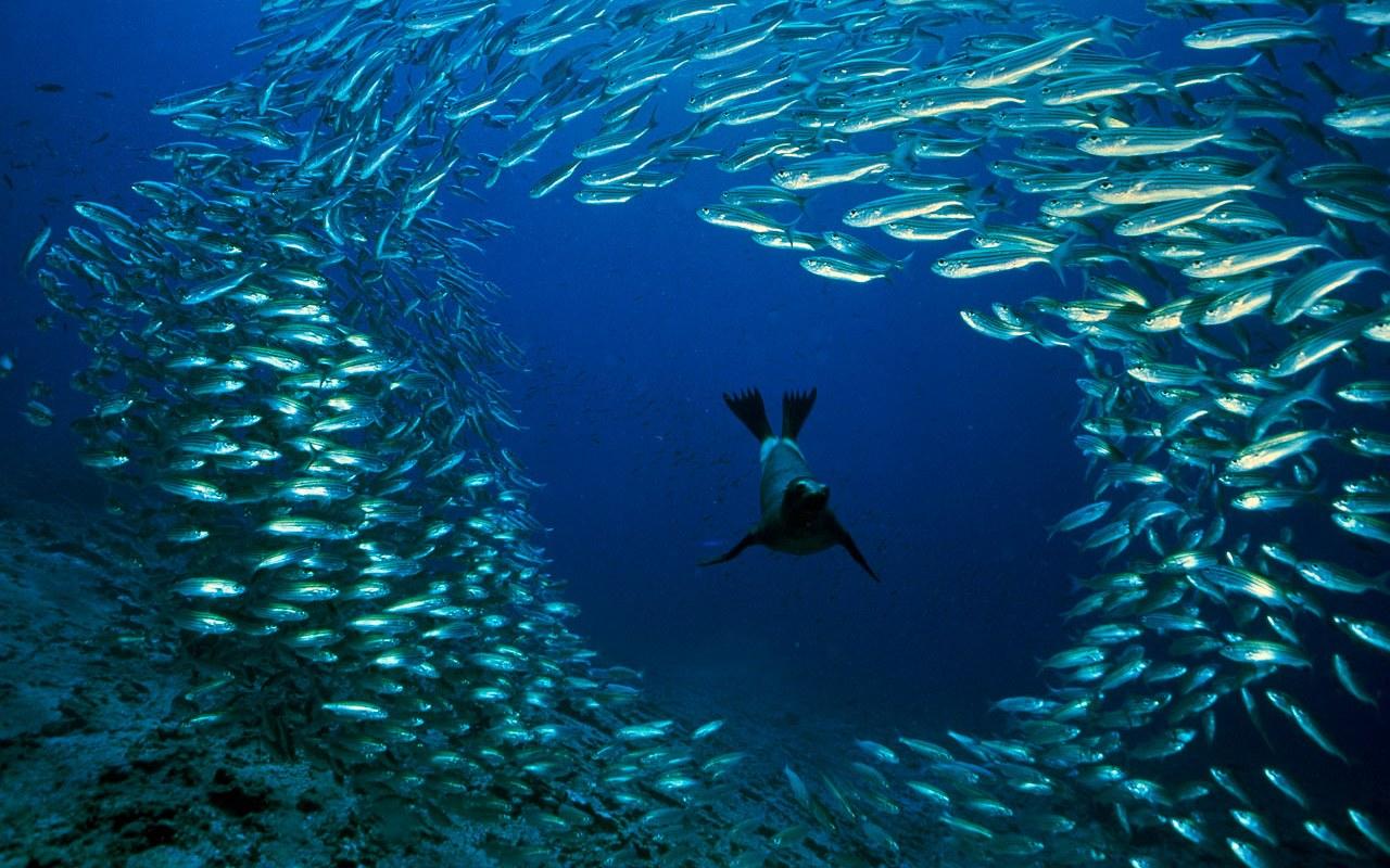 Доклад покорение морских глубин 9342