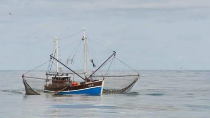 ловля креветки в море