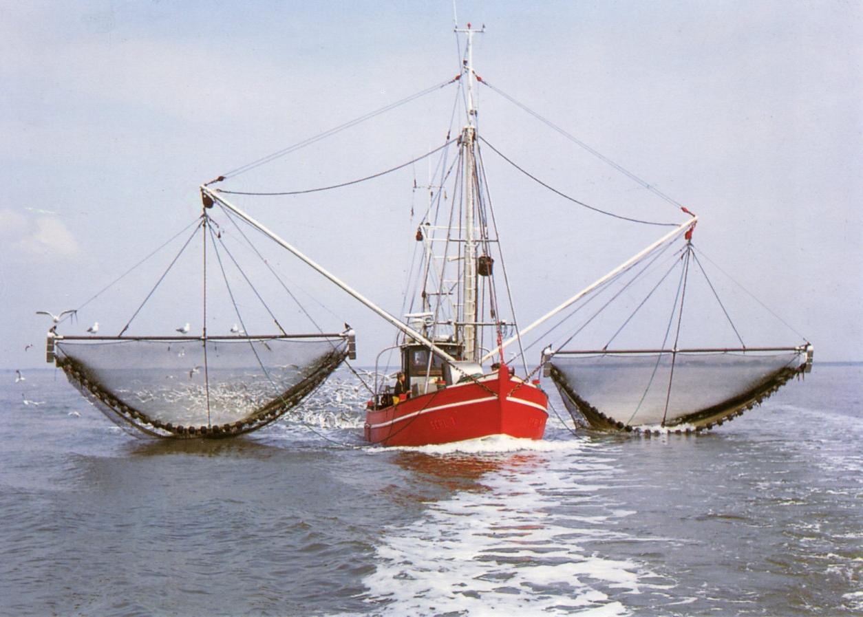 экипаж рыболовного судна за путину выловил 9571 ц рыбы это